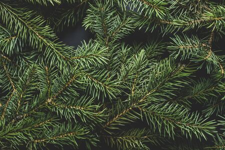 Christmas tree branches. Christmas concept, nature, winter. Background for postcards. Flat lay, top view. Banco de Imagens - 133462399