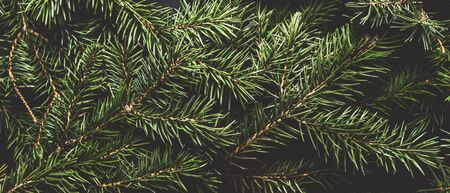 Christmas tree branches. The concept of the new year, christmas, nature. Banner. Flat lay, top view. Banco de Imagens - 133462444