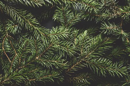 Christmas tree branches. Christmas concept, nature, winter. Background for postcards. Flat lay, top view.