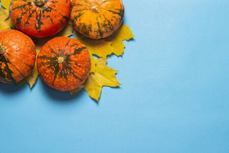 Ripe Pumpkins and yellow autumn leaves on a blue background. Harvest concept, Thanksgiving day, cook food, autumn. Flat lay, top view.