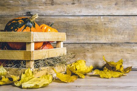 Pumpkins and wooden box on a wooden background. Halloween concept, harvest, halloween eve.