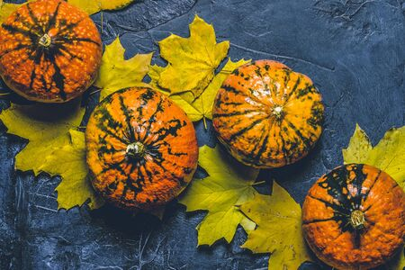 Pumpkins and autumn leaves on a blue dark stone background. Concept autumn, halloween, harvest. Banner. Flat lay, top view.