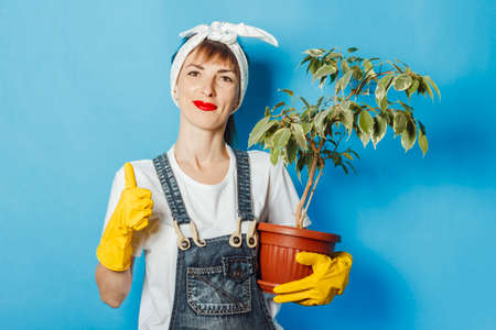 Young woman in rubber gloves holds a flower against a blue background. Cleaning concept, cleaning service, high quality.