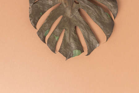 Dry tropical monstera leaf on brown background. Top view, flat lay.