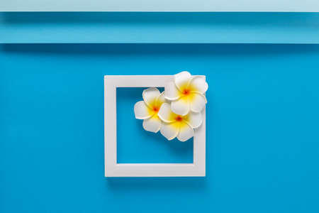 Frangipani flowers on a square podium on a folded blue background. Top view, flat lay.