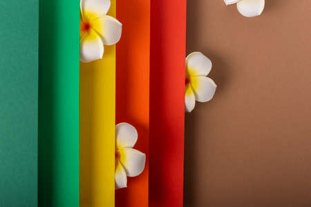 Frangipani tropical flower on colorful folded paper design. Top view, flat lay.