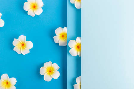 Frangipani flowers on a folded blue paper background. Top view, flat lay.