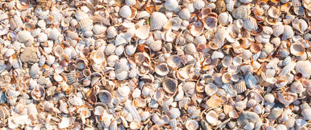 Background with beautiful seashells on a sunny day. Top view, flat lay. Banner.