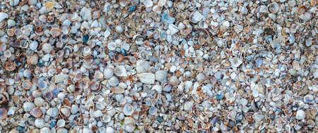 Seashells background, many small beautiful seashells. Top view, flat lay. Banner.