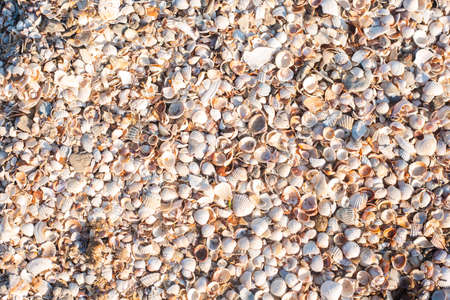 Background with beautiful seashells on a sunny day. Top view, flat lay. Фото со стока