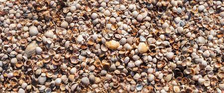 Background from seashells, many small beautiful seashells. Top view, flat lay. Banner.