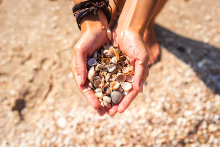 Seashells in female hands on the background of the beach. Top view, flat lay.