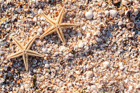 Starfishes on the background of seashells on a sunny day. Top view, flat lay. Фото со стока