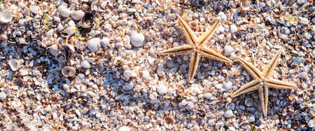 Starfishes on the background of seashells on a sunny day. Top view, flat lay. Banner.