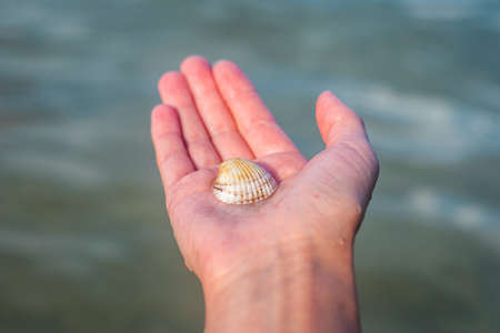 Seashell in a female palm against the background of the sea.