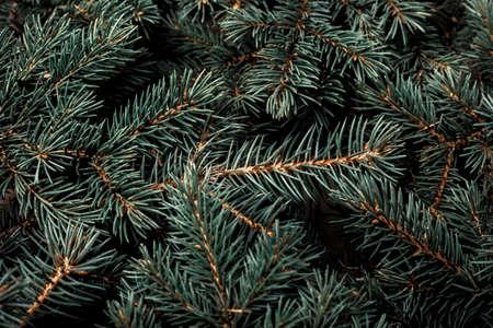 Christmas tree, branches. Christmas, New Year. Wallpaper. Flat lay, top view. Фото со стока