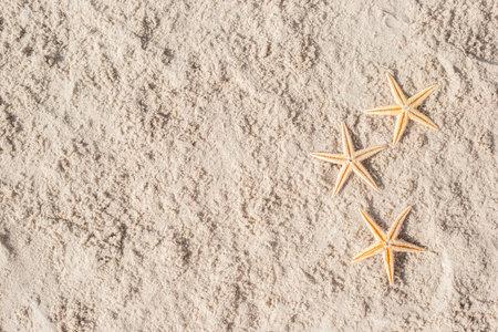 Three starfish on the sand. Top view, flat lay. Фото со стока
