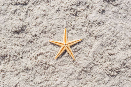 Gold starfish on a sandy beach. Top view, flat lay.