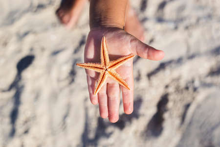Beautiful starfish on a child's palm on a sandy beach.