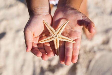Children's hands are holding a beautiful starfish on the sandy beach.