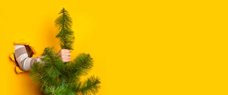 Hand holds a Christmas tree on a yellow background. Concept for New Years and Christmas Eve. Banner. Фото со стока