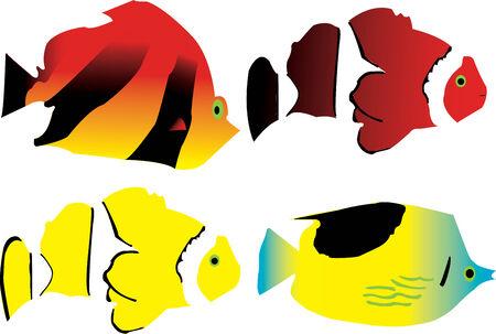 nemo: Tropic fish