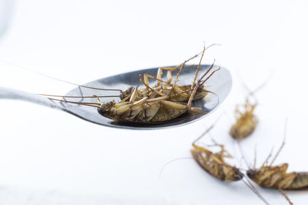 The dead cockroaches in a spoon on a white background.