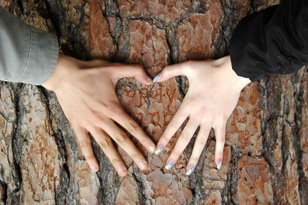 cuore in mano: Cuore fatto da donne e uomini mani sulla corteccia