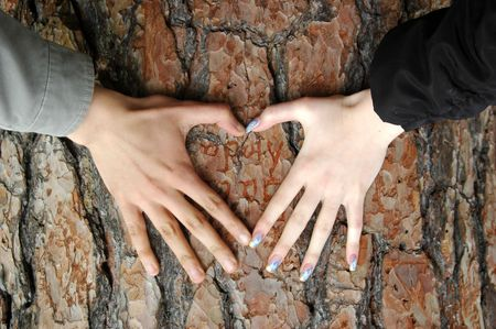 heart shape with hands: Heart made from women and man hands on the bark Stock Photo