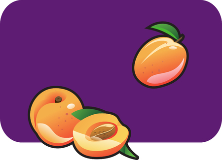 few: Color illustration of a apricot. Part of my vector fruit Collection.