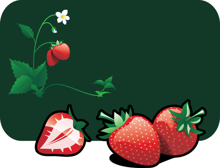 bacca: Vector color illustration of a strawberries.