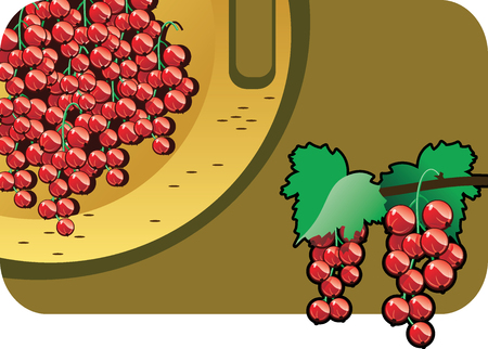 red currant: Vector color illustration of a red currant.  The vector file is in AI-EPS8 format.