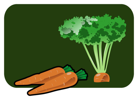 Vector color illustration of a carrot. Vector