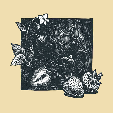 market gardening: Vector  illustration of a strawberries stylized as engraving