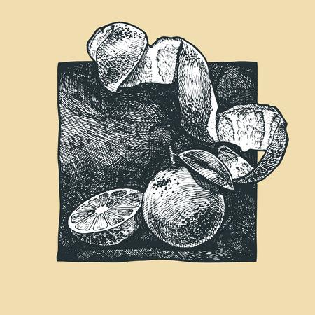 market gardening: Vector  illustration of a orange  stylized as engraving