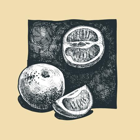 gravure: Vector  illustration of a grapefruit  stylized as engraving  Illustration