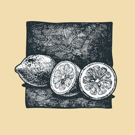 gravure: Vector  illustration of a lemon  stylized as engraving