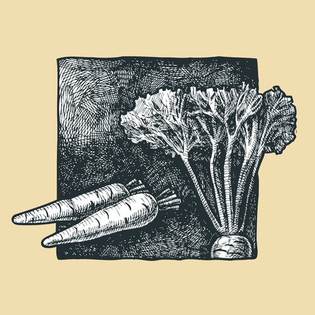 verdure: illustration of a carrot stylized as engraving