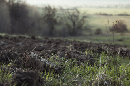 Horizontal Photo of plowing and fresh young green grass  photo