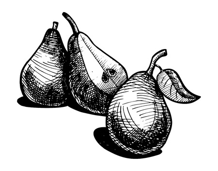 tree cross section: Icon of pear, vector illustration stylized as engraving.