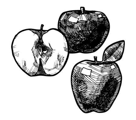 Stylized icon of three apples, vector illustration stylized as engraving.