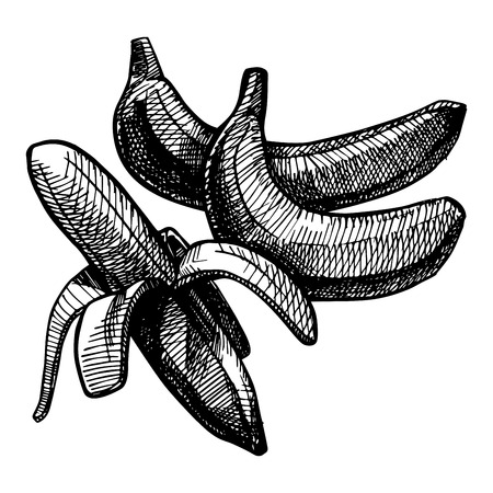 bunchy: Icon of banana, vector illustration stylized as engraving.