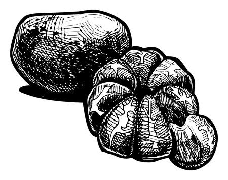 lobule: Vector  illustration of a tangerine stylized as engraving.   Illustration