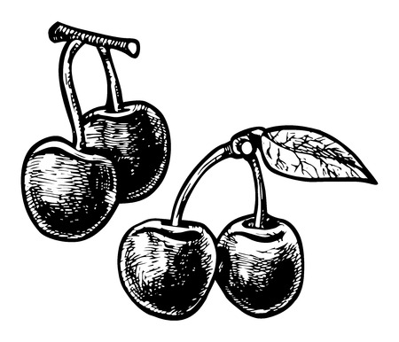 indigenous medicine: illustration of a cherries  stylized as engraving.