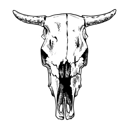 calaveras: Ilustración del vector del cráneo de vaca estilizado como el grabado. Vista de la cara.