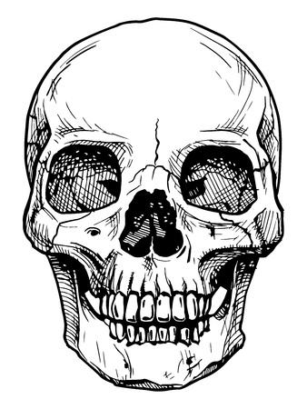calavera: Ilustración vectorial blanco y negro del cráneo humano con una mandíbula inferior estilo dibujado a mano de tinta.