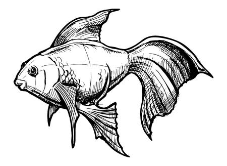 hand drawn illustration of Gold fish
