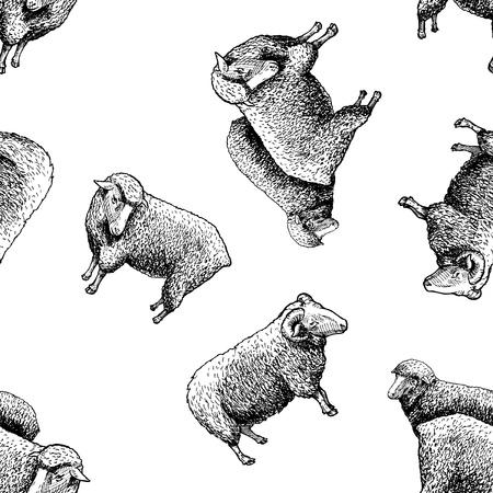 Naadloos patroon met schapen. Vectorillustratie in vintage gegraveerde stijl op witte achtergrond.