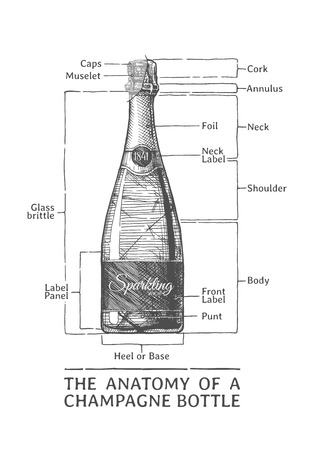The anatomy of a Champagne bottle, hand drawn illustration