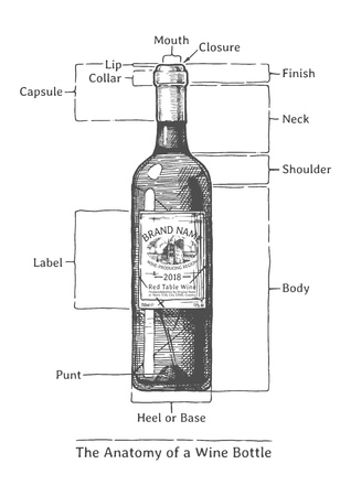 The Anatomy of a Wine bottle, hand drawn illustration